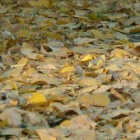 Jesień na Niebieskich Źródłach